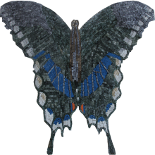 Blue Butterfly no Background
