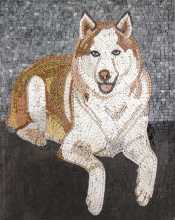 AN254 brown & white dog on grey background Mosaic