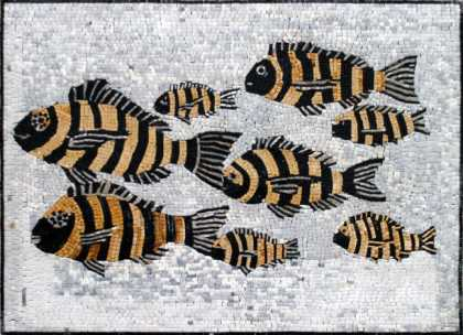 AN72 Black & gold swimming fish group Mosaic